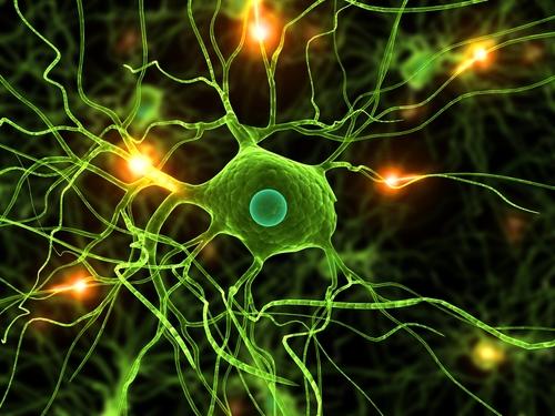 Што такое дэндрытныя клеткі?