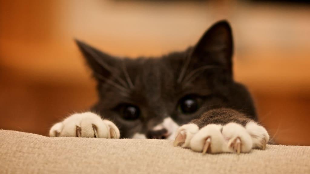 Ярмілаў дзень. Назіраем за коткамі.