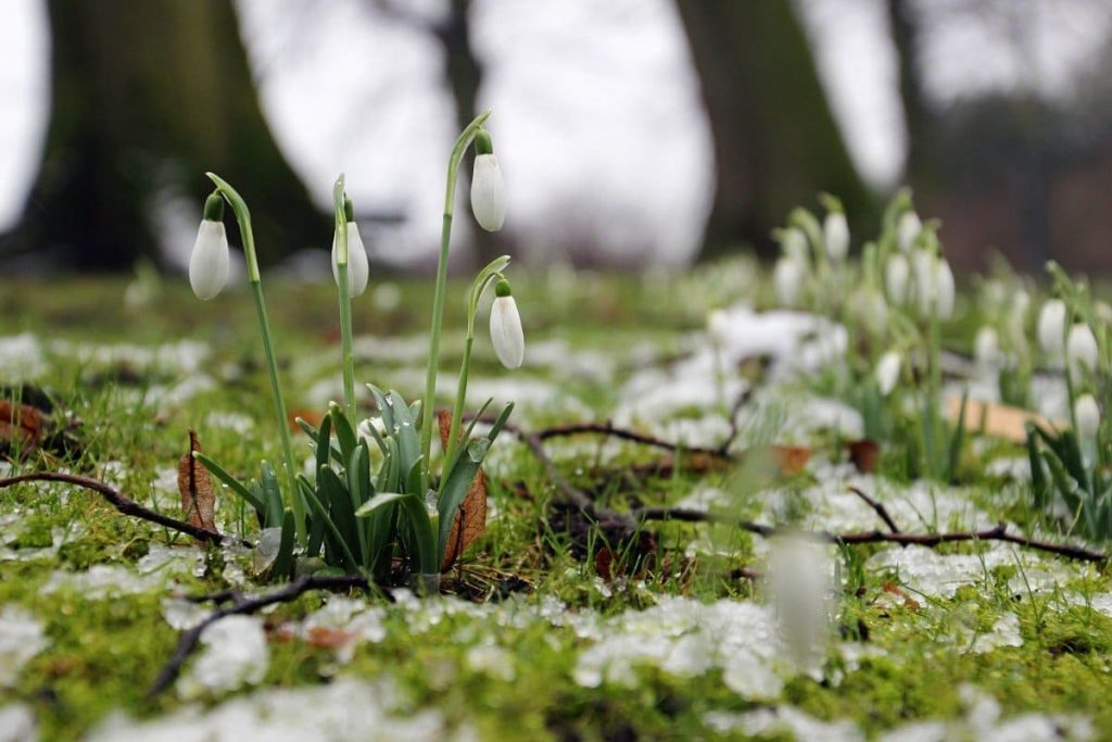 Міжнародныя святы 20 сакавіка 2020 года. Дзень веснавога раўнадзенства.