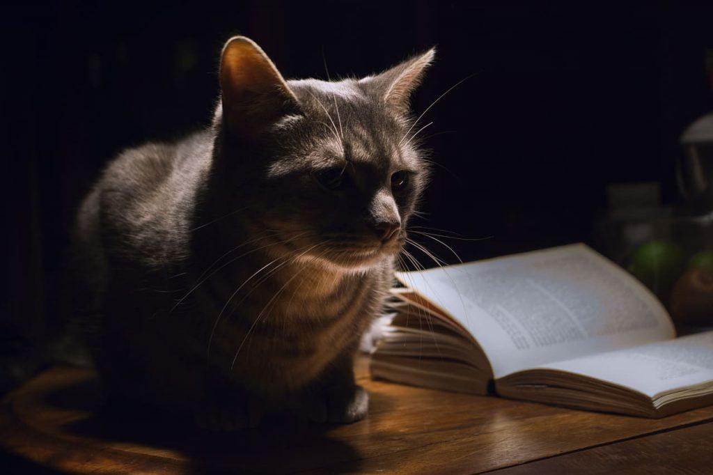 Пазітыў. Кнігі папяровыя.