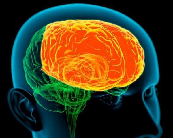 Алкаголь і мозг. За што адказваюць лобныя долі.