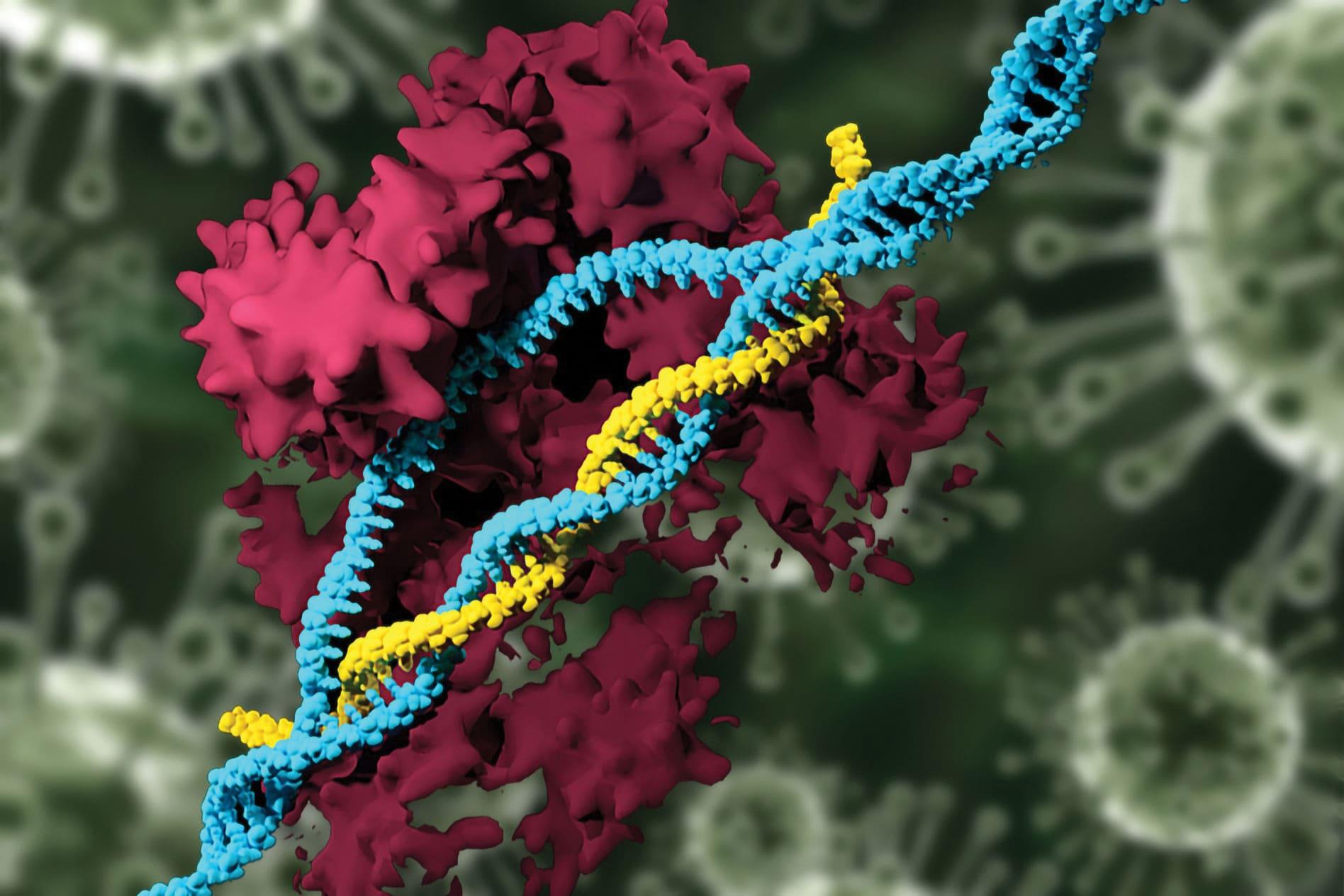 Цынк і селен. Мутацыя віруса ў клетках пры дэфіцыце.