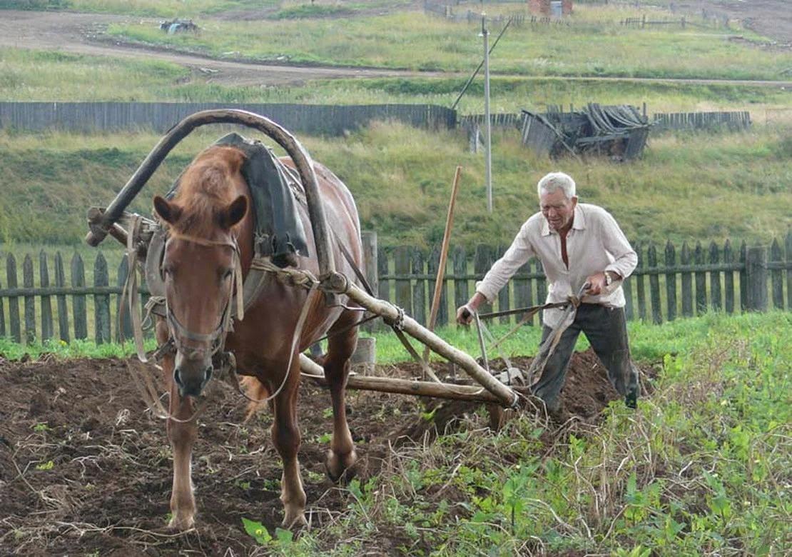 Градавая серада. Калі нельга працаваць на зямлі, а трэба.