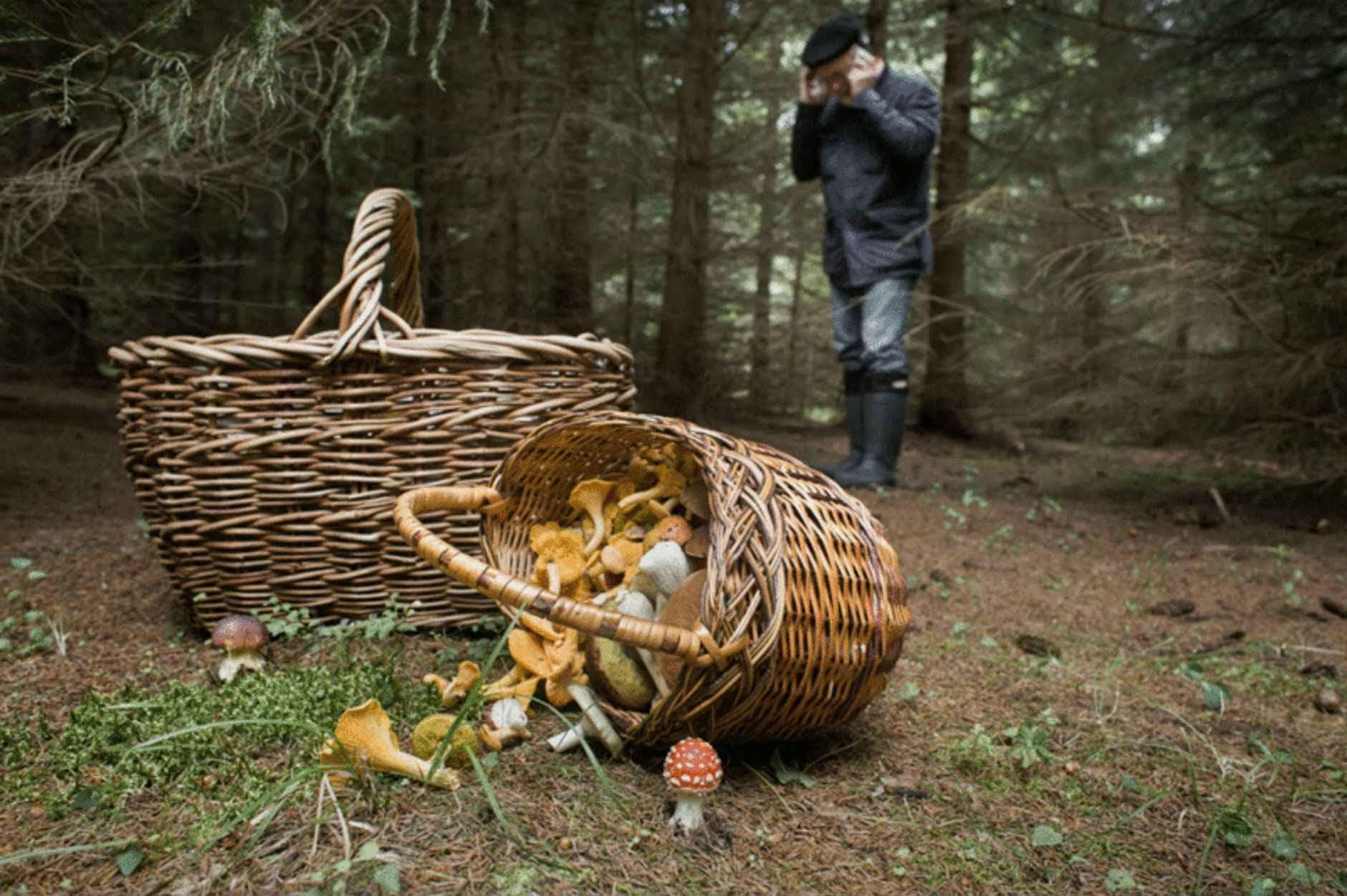 Правілы бяспекі ў лесе. Вазьміце з сабой цалкам зараджаны мабільнік.