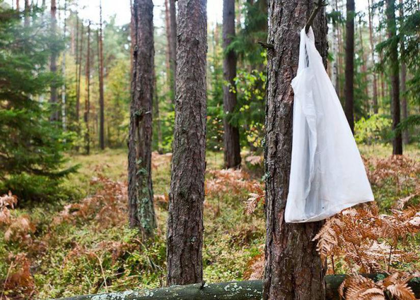 Правілы бяспекі ў лесе. Як падаць знак.