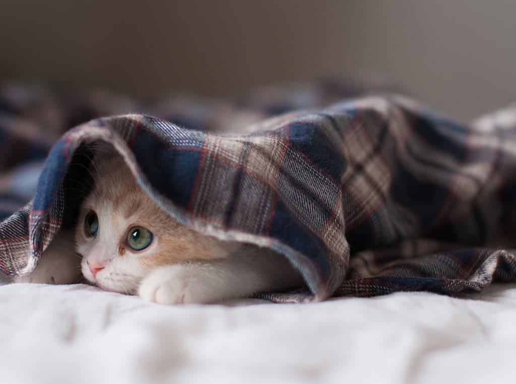 Котка Аліса. Чаму сорамна Леапольду.