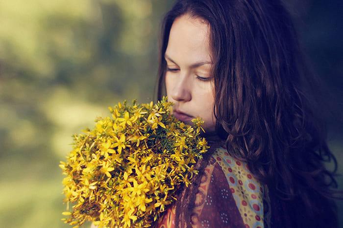Святаяннік. Цвіце на святога Яна.