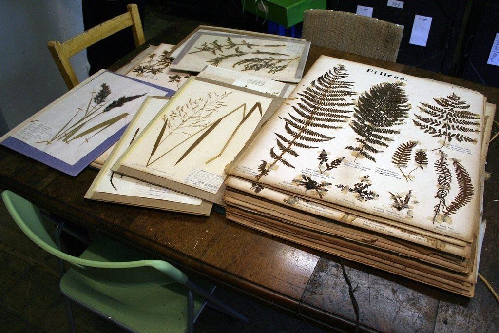 Гісторыя гербарыя