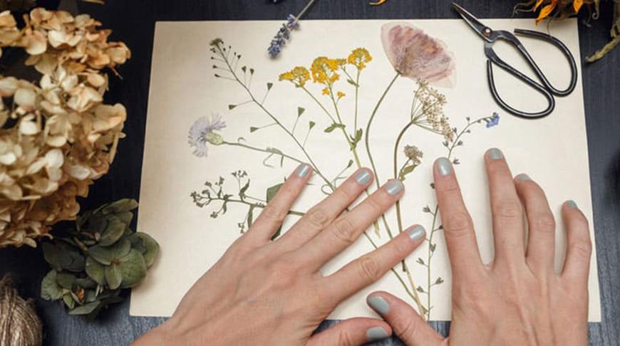 Разнавіднасці гербарыя
