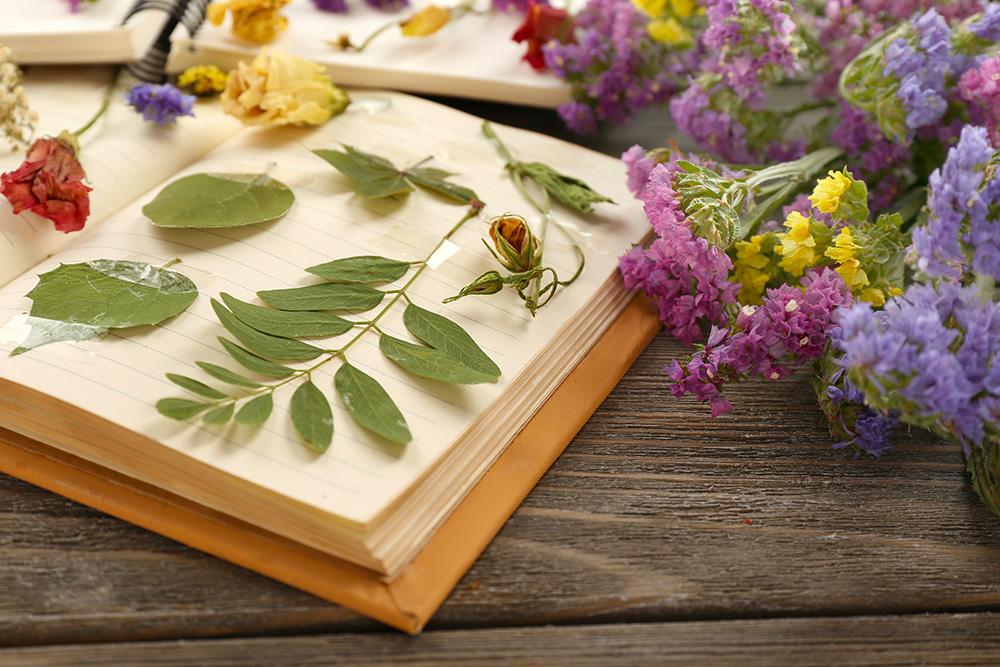 Цікавыя факты пра гербарый