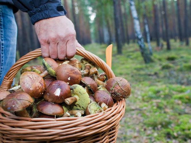 Як шукаць грыбы у лесеі?