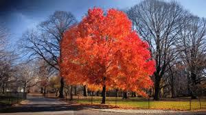 Восеньскае дрэва